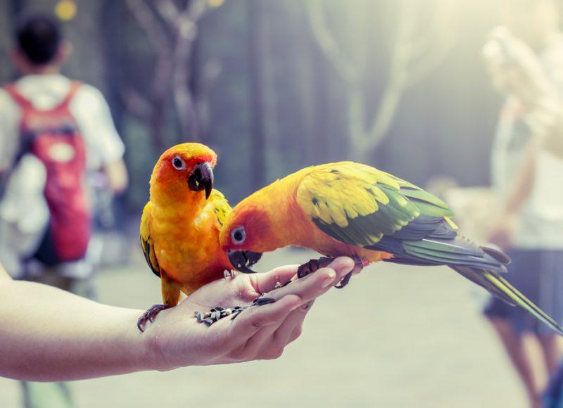 papegaaien eten uit hand